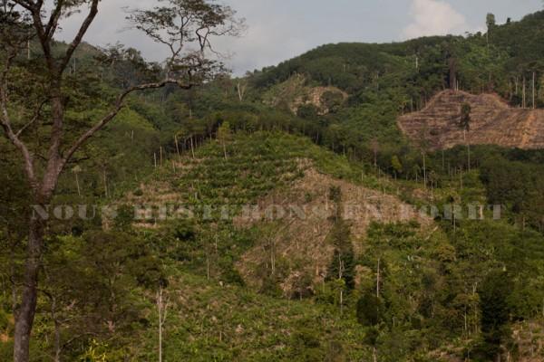 Le territoire des Maniq est rongé par les plantations d'hévéas qui entravent leur nomadisme et menacent leur existence.